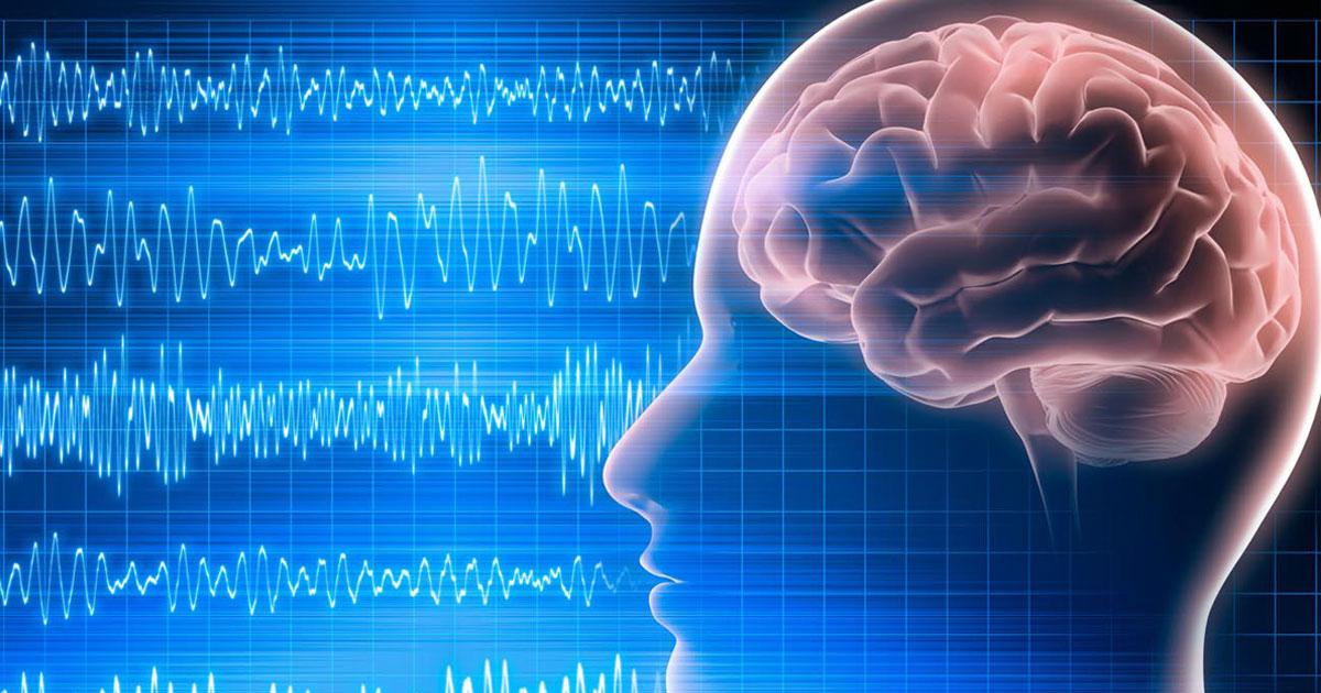 Человеческий мозг и графики