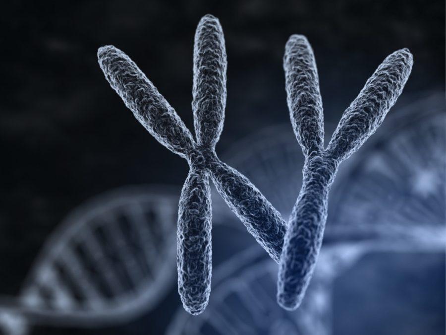 Хромомсомы человека