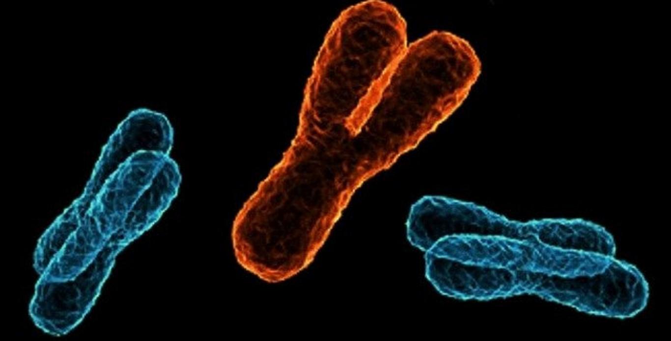 Хромомсомы человека в ДНК