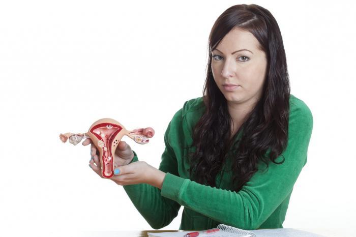 Модель яичника